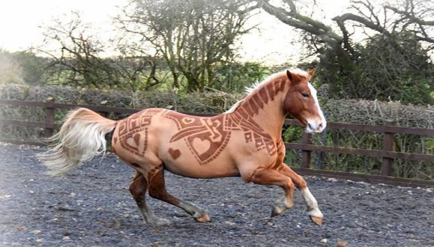 άνθρωπος άλογα