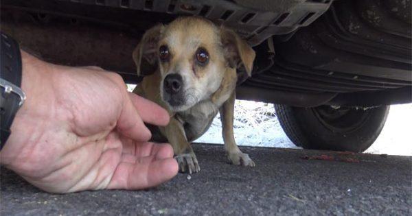Θα δακρύσετε! Αυτό το σκυλάκι είχε χαθεί στην πόλη για μέρες όταν… (Βίντεο)