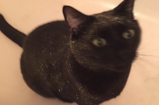 Γάτα glitter
