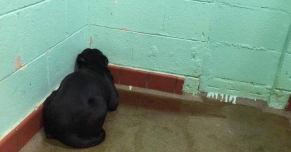 Είδε το Λαμπραντόρ να ξαπλώνει πάνω στις ακαθαρσίες του κοιτώντας τον τοίχο. Τότε δημοσίευσε αυτή τη φωτογραφία…