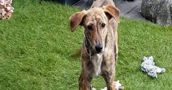 Ντροπή σε αυτούς που κακοποίησαν αυτόν τον σκύλο – Τον έσωσε μια Ολανδέζα τουρίστρια