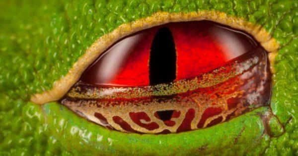 Τα εντυπωσιακά και παράξενα μάτια του ζωικού βασιλείου