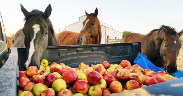 3 Άλογα βλέπουν τυχαία έναν φορτηγό γεμάτο μήλα. Μόλις δείτε τι κάνει το μεσαίο, θα μείνετε άφωνοι!