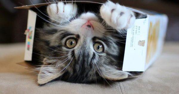 Γιατί οι γάτες τρυπώνουν και στριμώχνονται σε μικρούς χώρους; [video]
