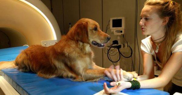Νέα έρευνα – Ο εγκέφαλος των σκύλων «πιάνει» τόσο τι λένε οι άνθρωποι όσο και πώς το λένε…