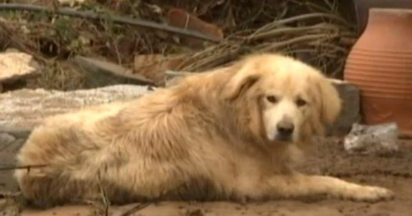 Ο σκύλος από τη Λακωνία που έμεινε πιστός στο αφεντικό του ακόμη και στο θάνατο