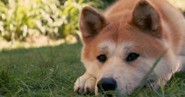 Γιατί τα σκυλιά γίνονται άγρια και ποιες λεπτομέρειες τα επηρεάζουν;