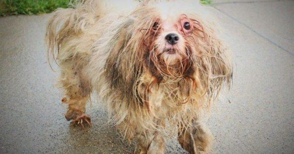 Τον βρήκαν σε άσχημη κατάσταση να τρυγιρίζει στους δρόμους, αλλά περιμένετε να δείτε πως είναι σήμερα!