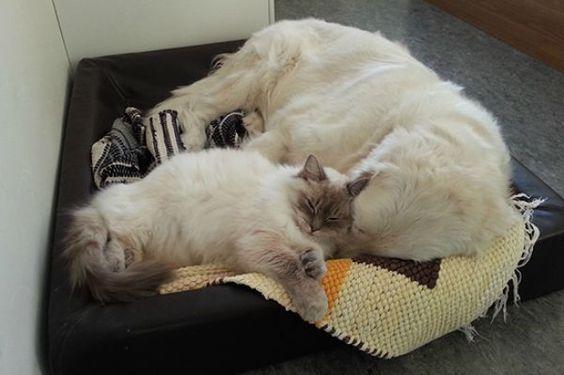 σπίτι Σκύλος κατοικίδια Γάτα