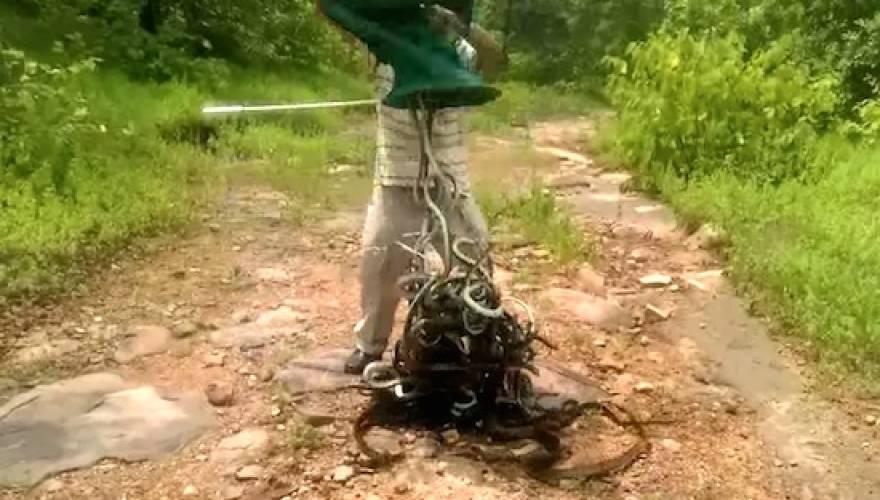 φίδια δηλητηριώδη φίδια