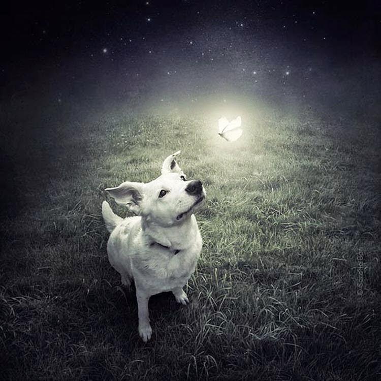 abandoned-dogs-incredible-photography-01