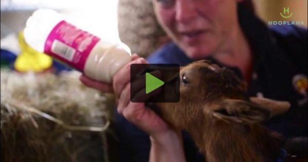Η πιο όμορφη ιστορία που έχετε δει (βίντεο)