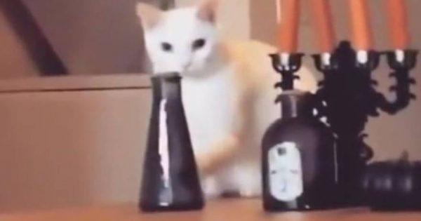 Πανέξυπνη γάτα έβαλε το βάζο στη θέση του μόλις είδε πως την βλέπει ο ιδιοκτήτης της (βίντεο)