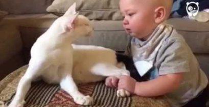 Η γάτα φροντίζει το μωρό