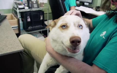 Περιποιητής σκύλων ομορφαίνει εγκαταλελειμμένα σκυλιά – Το βίντεο που θα σας φτιάξει την ημέρα