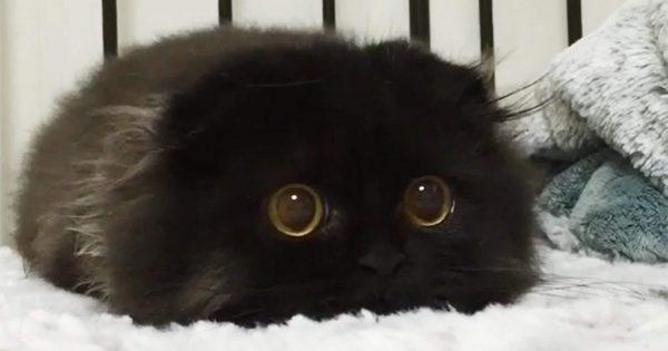 Αυτή η πανέμορφη χνουδωτή ψιψίνα έχει κάνει όλο το διαδίκτυο να την ερωτευτεί. Ο λόγος; Προσέξτε τα μάτια της!