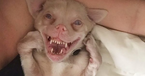 Σκύλος-νυχτερίδα με ειδικές ανάγκες έχει γίνει αστέρι του Instagram