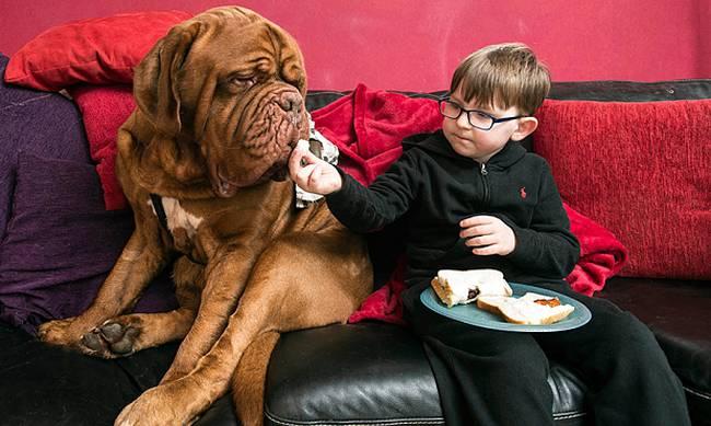 Σκύλος παιδί όραση
