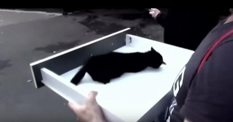 διάσωση ζώων γατάκι