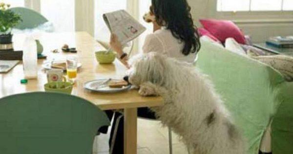 Έρευνα: Ο σκύλος σας κλέβει φαγητό όταν δεν κοιτάτε!