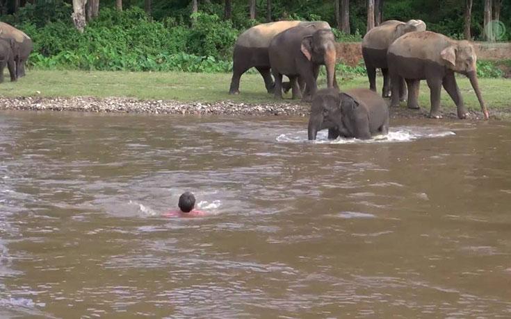 elefantas-trexei-na-swsei-anthrwpo-pou-parasyretai-apo-potami