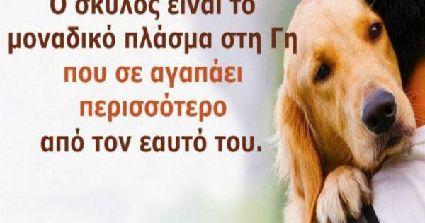 13 υπέροχες εικόνες που θα καταλάβουν μόνο όσοι λατρεύουν σαν τρελοί τα σκυλιά!