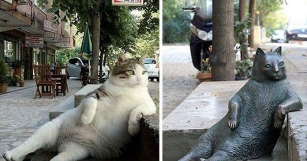 Η γάτα που πέθανε αλλά θα αράζει αιώνια στην Κωνσταντινούπολη