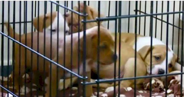Στην Αμερική αλλάζουν τον νόμο και καταδικάζουν κάθε κακοποίηση ζώου ως κακούργημα