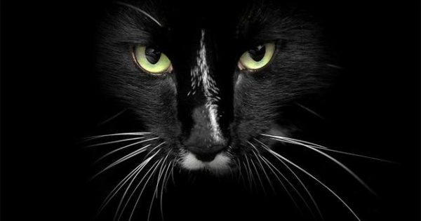 Γιατί οι γάτες έχουν μουστάκια και τα χρειάζονται οπωσδήποτε!
