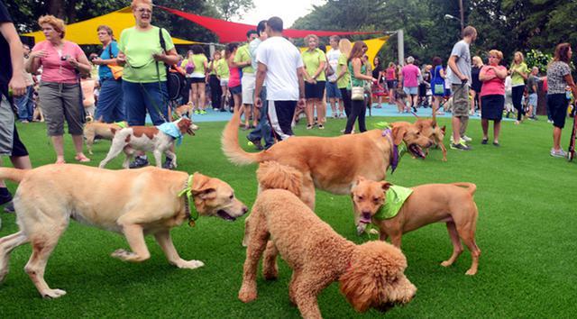 Σκύλος σκύλοι κοινόχρηστα πάρκα σκύλων κοινόχρηστα πάρκα