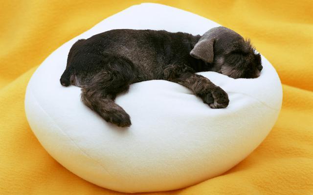 Σκύλος όνειρο