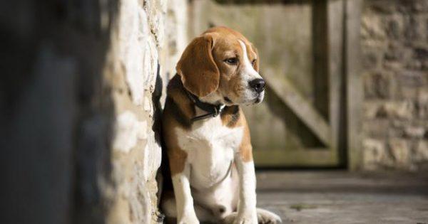 Ο σκύλος μύρισε τον φόβο του και τον δάγκωσε! Μύθος ή πραγματικότητα;