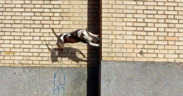 Ένας σκύλος διαφορετικός από τους άλλους! Κάνει παρκούρ και μας αφήνει άφωνους (βίντεο)