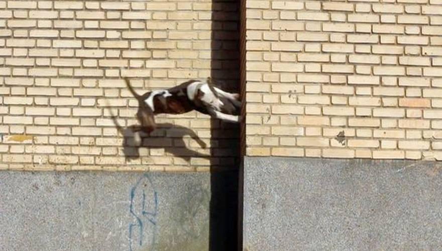 parkour_dog
