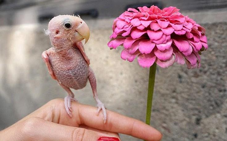 φαλακρό πουλί