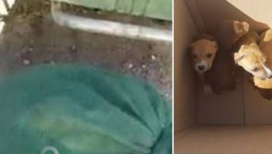 κουταβάκια κακοποίηση σκύλων Ηράκλειο
