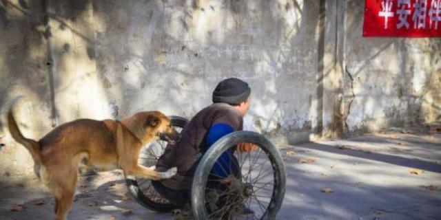 Σκύλος ανάπηρος αναπηρικό καροτσάκι