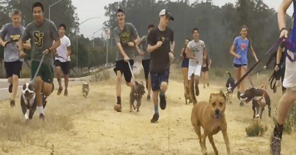Μαθητές πήραν βόλτα σκυλιά που ήταν κλεισμένα σε καταφύγιο και αυτά ξετρελάθηκαν!
