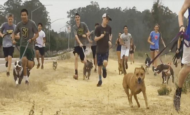 σκυλιά καταφύγιο