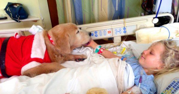 Η πολύτιμη βοήθεια των σκύλων θεραπείας