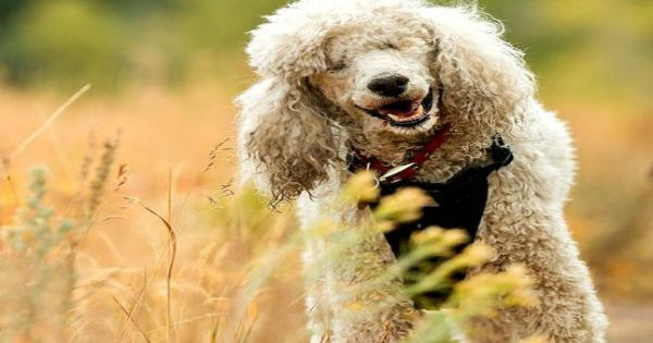 Τυφλός σκύλος βρίσκει τον τρόπο να χαίρεται τη ζωή χάρη στην αδερφή του