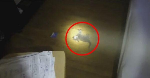 Πυροσβέστης βλέπει ένα γατάκι λιπόθυμο στο φλεγόμενο σπίτι. Η συνέχεια; Θα σας κόψει την ανάσα!