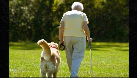 Ηλικιωμένη σκότωσε τον πιστό κι αφοσιωμένο της σκύλο που τη συντρόφευε εδώ και 12 χρόνια