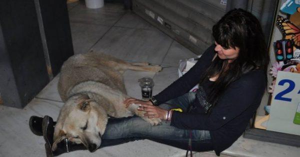 Στη γειτονιά των αγγέλων ταξίδεψε ο 16χρονος Αρκούδος, ο πιο αγαπητός αδέσποτος σκύλος της Νέας Σμύρνης