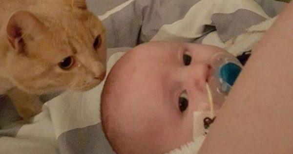 Η γάτα πλησίασε στα κρυφά το άρρωστο μωράκι. Μόλις οι γονείς την πήραν χαμπάρι, έμειναν να κοιτούν αποσβολωμένοι!