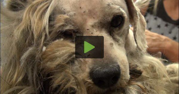 Ένας σκύλος που ήταν για πάντα άστεγος, πέτυχε μια απίστευτη μεταμόρφωση! (βίντεο)