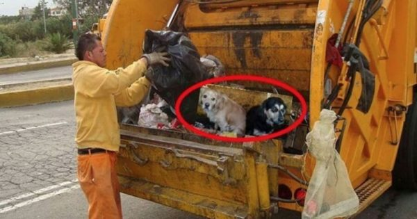 Δεν ήθελε τα σκυλιά της και τα πέταξε στο απορριμματοφόρο. Η συνέχεια; Θα σας σοκάρει!