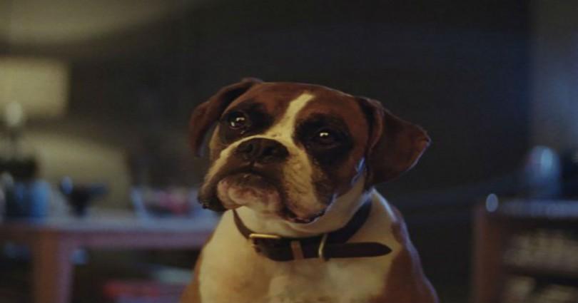 χριστουγεννιάτικη διαφήμιση Σκύλος