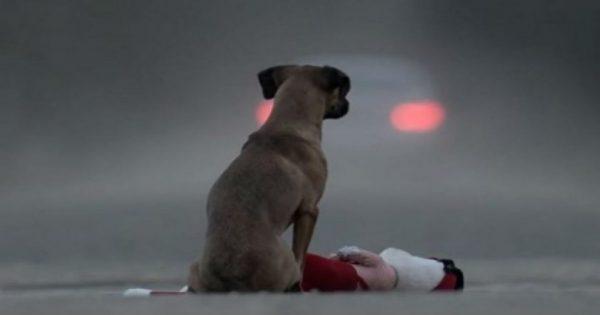 Θέλετε σκύλο; Αυτό το βίντεο θα σας οδηγήσει να το σκεφτείτε καλύτερα!
