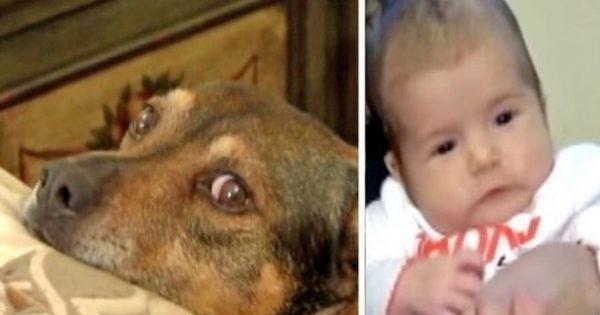 Μοναδικό: Σκυλί πηδάει στο κρεβάτι της μητέρας και την οδηγεί στο μωρό της που έχει σταματήσει να αναπνέει.